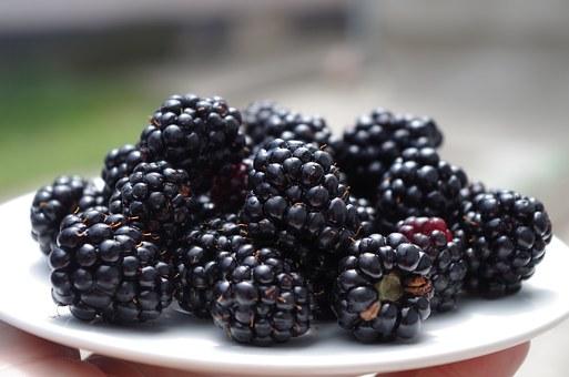 blackberries-1045728__340